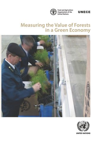 image of Measuring the Value of Forests in a Green Economy
